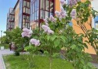 Зелёный район: что и как растет во дворах новостроек в Пушкине