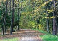 Парки Старого Петергофа. Досуг для ценителей естественной природы